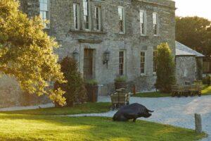 THE PIG–at Harlyn Bay, Padstow